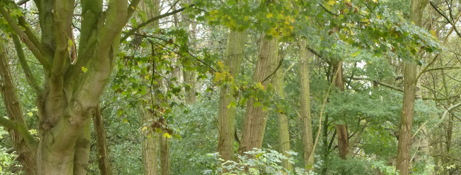 Waldretter