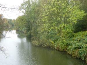 Wald am Ernst_August_Kanal